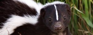 Will an air purifier remove skunk smell